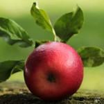 IDR-fragrance-douceur-de-pomme
